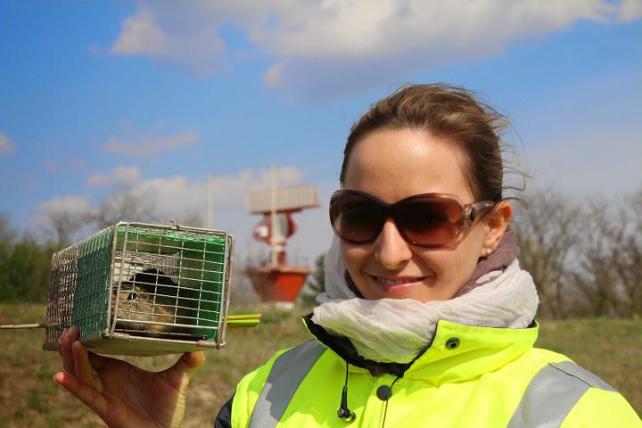 Munkácsi Zsuzsa a Budapest Airport környezetvédelmi specialista munkatársa nem ijed meg sem az egerektől, sem az ürgéktől. (Fotók: Budapest Airport) | © AIRportal.hu